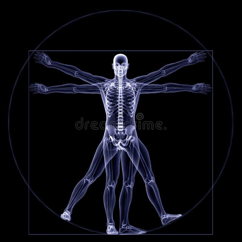 De Röntgenstraal van het skelet - Vitruvian stock illustratie