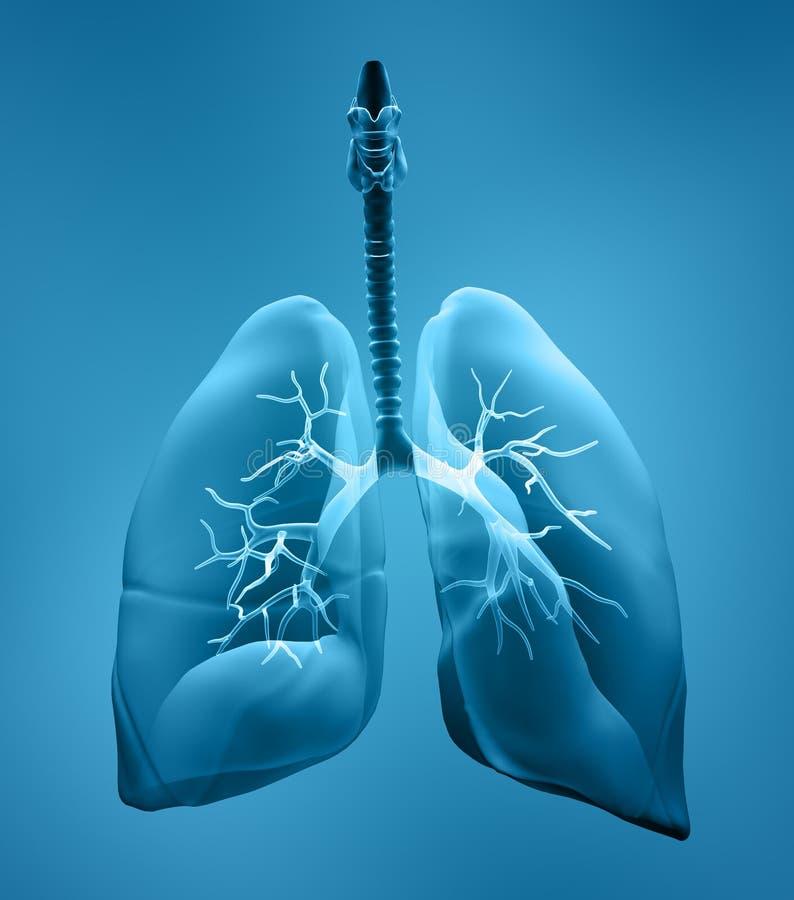 De röntgenstraal van longen stock illustratie