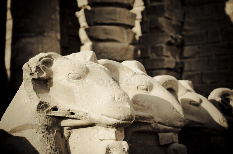 De ram geleide beeldhouwwerken van de Sfinx, Karnak, Egypte., Karn royalty-vrije stock fotografie