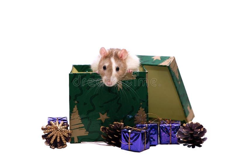 De rat van de baby met de decoratie van Kerstmis royalty-vrije stock foto