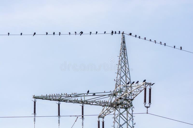 De raven zitten op een machtslijn stock foto