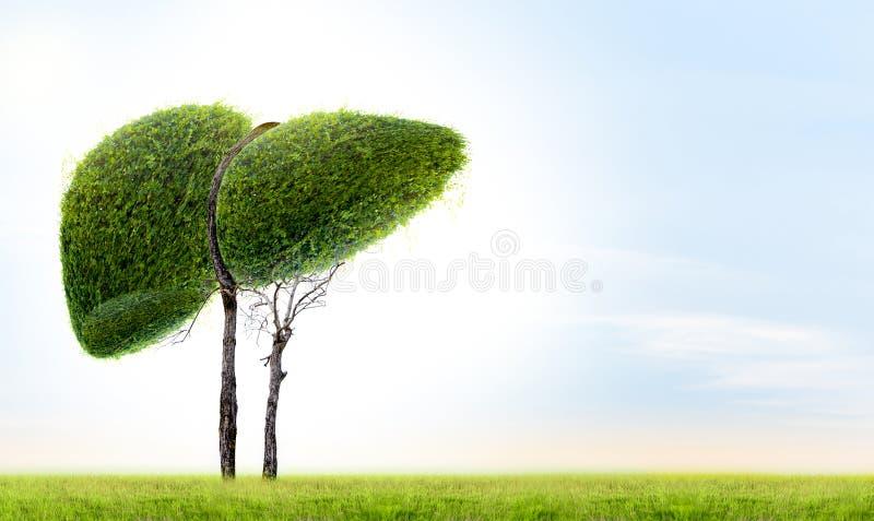 De realistische leverbeelden zijn menselijke groene boomvormen over ziekten en cirrosemilieu royalty-vrije illustratie