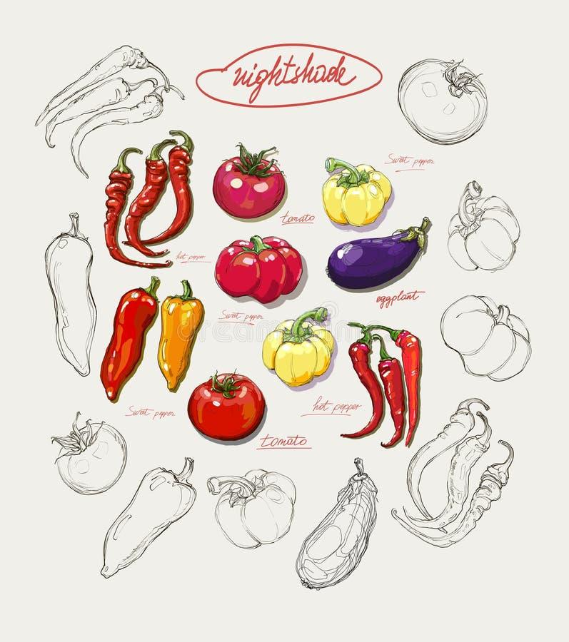De realistische vectorreeks van de handtekening groenten stock afbeeldingen