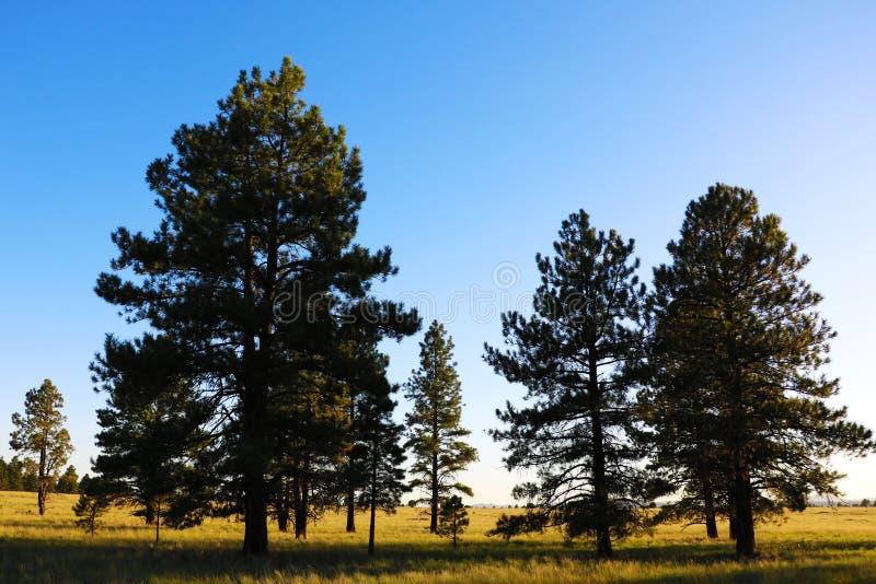 De recente middagzon in Arizona giet lange schaduwen over een breed grasgebied, boom behandelde heuvels en blauwe hemel met wolke royalty-vrije stock foto