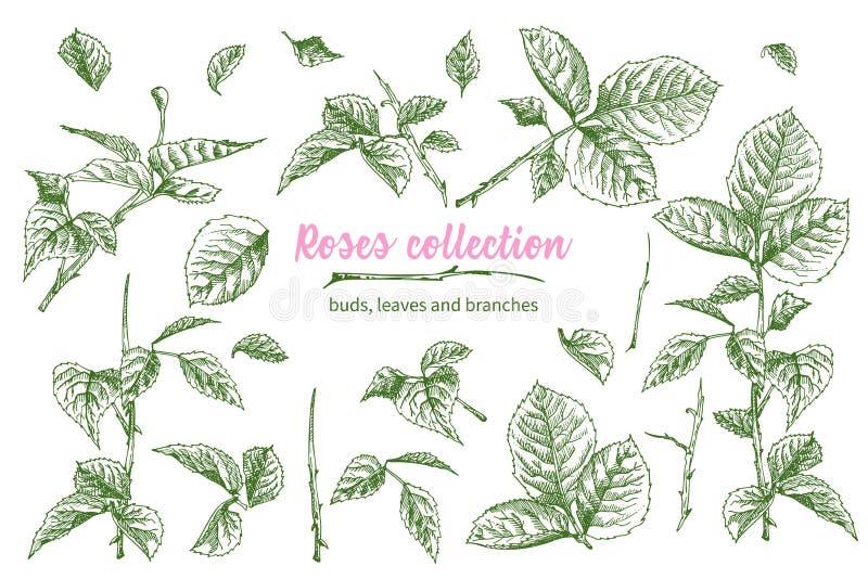 De reeks Hand getrokken schets roze rozen, bladeren en takken detailleerde uitstekende botanische illuatration Bloemen frame Silh stock illustratie