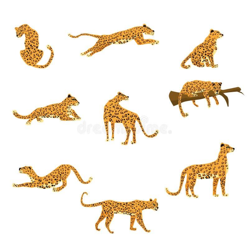 De reeks luipaarden in divers stelt leuke tendensstijl, dierlijk roofdierzoogdier, wildernis Vectordieillustratie op wit wordt ge royalty-vrije illustratie