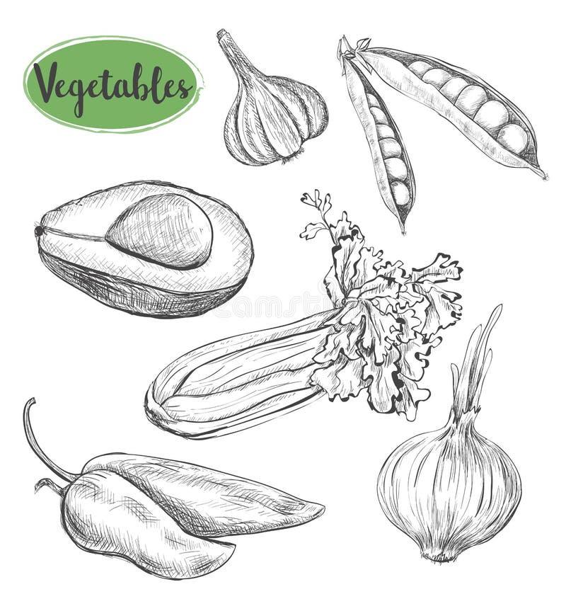 De reeks van de groentenschets vector illustratie