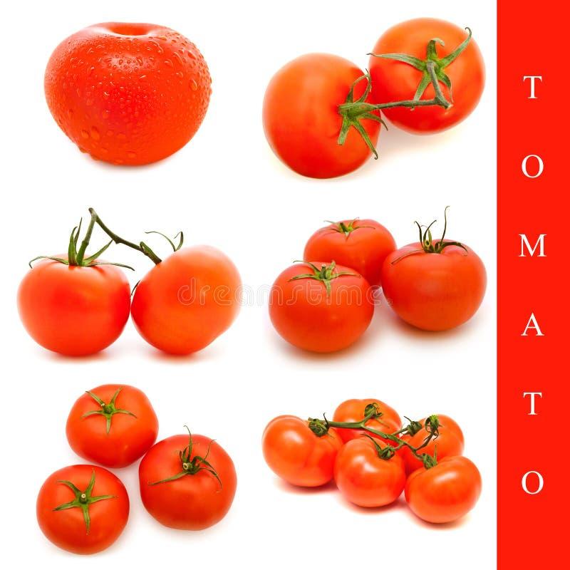 De reeks van de tomaat stock fotografie