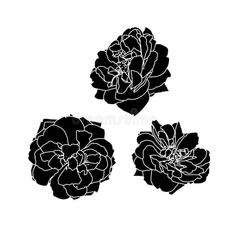 De reeks van drie vector zwarte silhouetten van nam toe stock illustratie