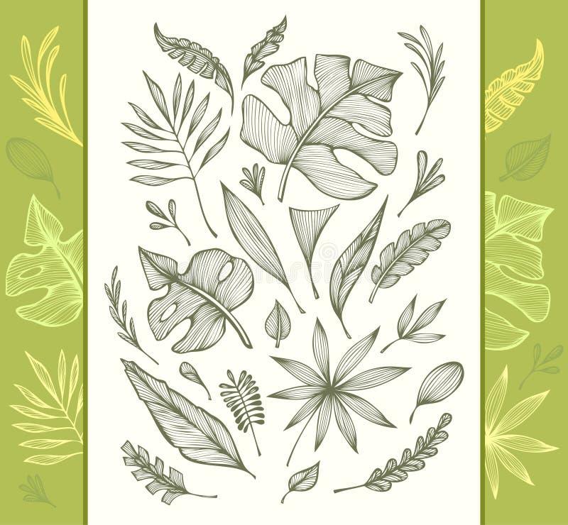 De reeks van hand trekt structuur van tropische bladerenzwarte op wit in lijnart. vector illustratie