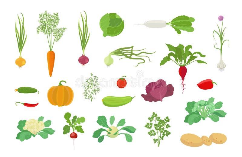 De reeks van het de installatiepictogram van de groentenoogst r De kool van de uiwortel, de dilletomaat van de knoflookpompoen en vector illustratie