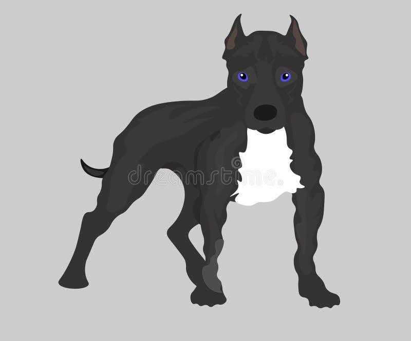 De reeks van het Webbeeld honden: Amerikaans Pit Bull Terrier Vector illustratie royalty-vrije illustratie