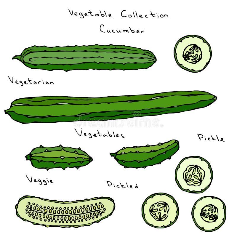 De Reeks van de komkommer het Vectorillustratie Lange Engelse Snijden, het Inleggen, Augurk, Groenten in het zuur, Burpless, Rond stock illustratie