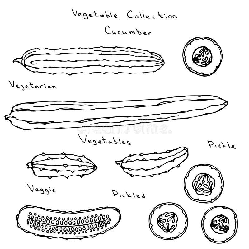De Reeks van de komkommer het Vectorillustratie Lange Engelse Snijden, het Inleggen, Augurk, Groenten in het zuur, Burpless, Rond royalty-vrije illustratie