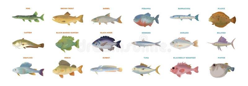De reeks van riviervissen royalty-vrije illustratie