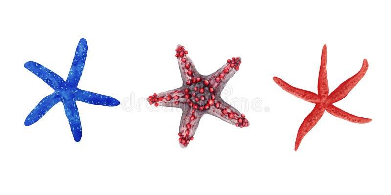 De reeks van de waterverfillustratie van kleurrijke heldere blauwe en rode tropische zeester die op witte achtergrond wordt geïso vector illustratie