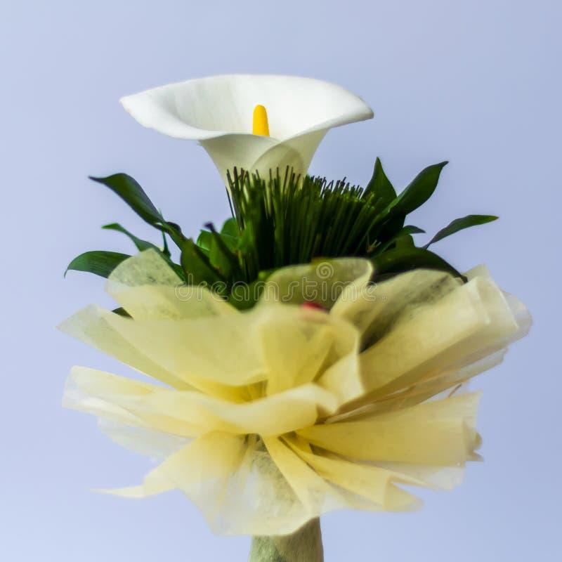 De regeling van de bloemanthurium Mooi boeket van bloemen stock afbeelding