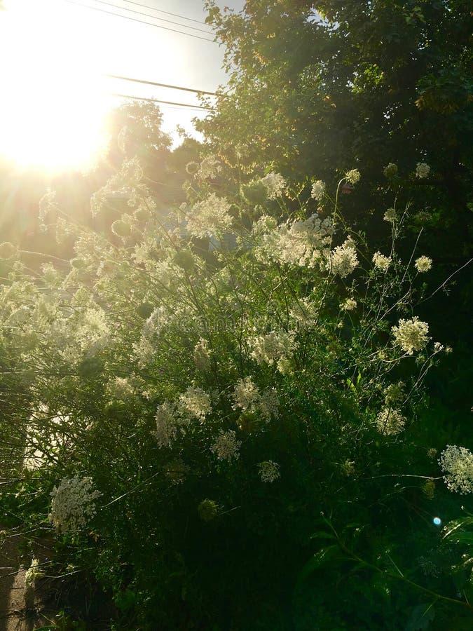 De regen en de zon concurreren in stortbuibloemen stock fotografie