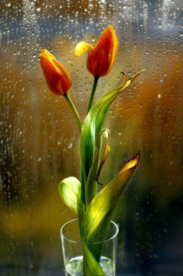 De regen gaat niet eternally stock afbeeldingen