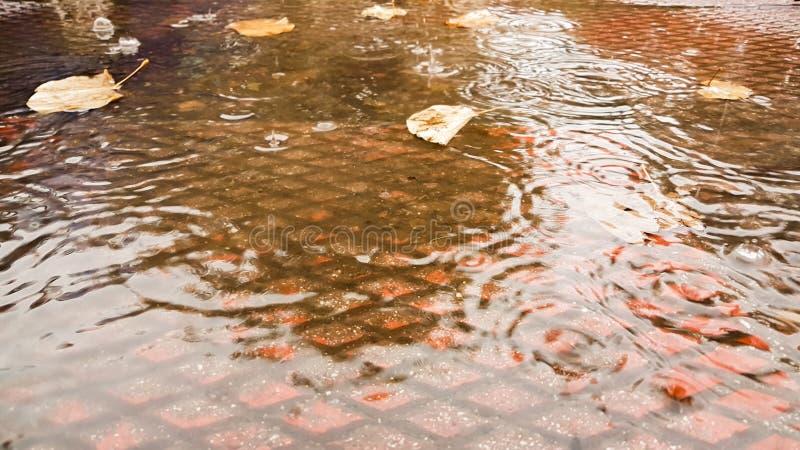 De regen laat vallen de herfstachtergrond van bladerenrimpelingen royalty-vrije stock afbeelding