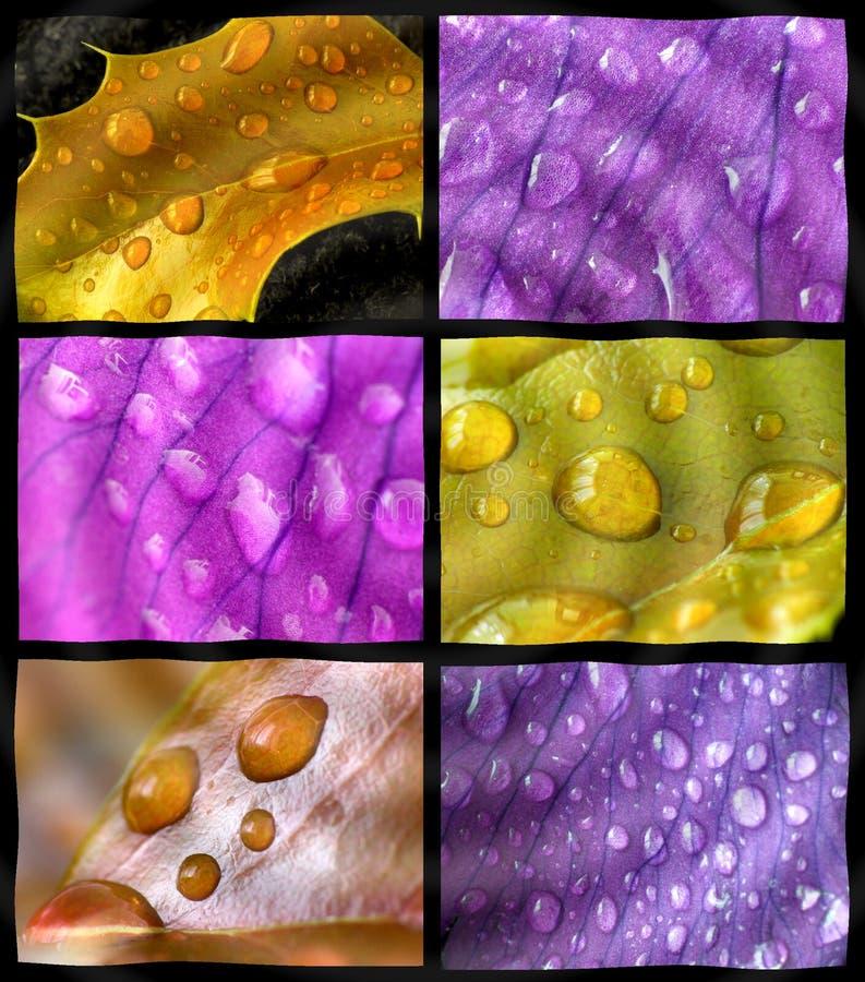De regen van de lente royalty-vrije stock fotografie