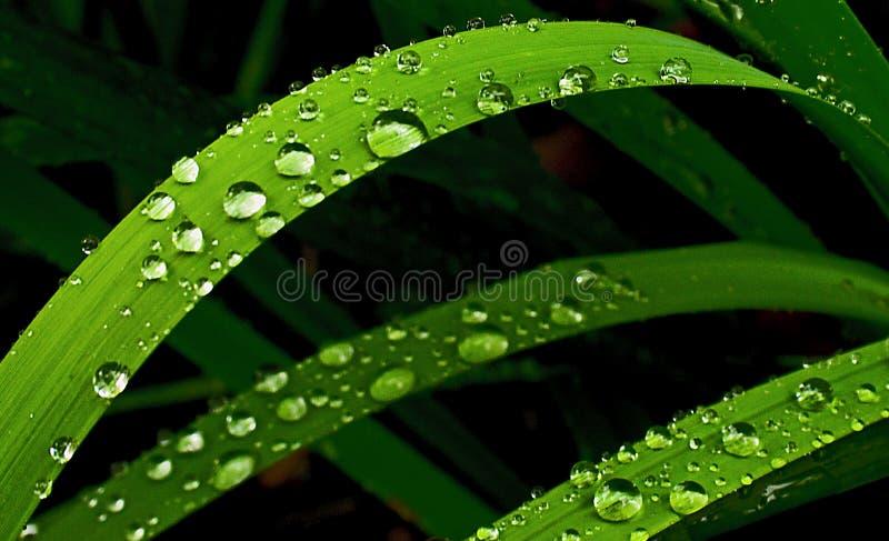 De regen van de zomer stock fotografie