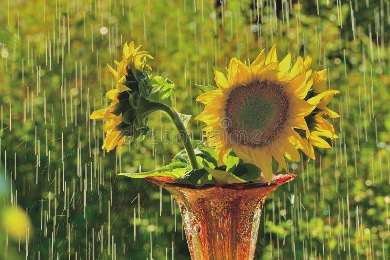 De regen van de zomer royalty-vrije stock afbeeldingen