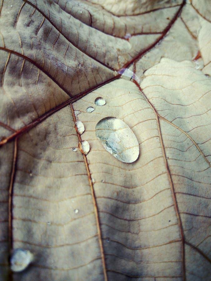 De regen van het bladwater royalty-vrije stock afbeeldingen