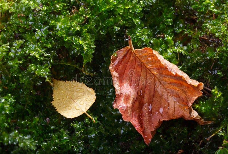 De regendalingen abscissed bladeren royalty-vrije stock foto