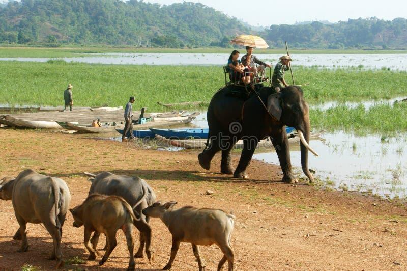 De reis van Azië, de zomervakantie, ecoreis, olifant stock fotografie