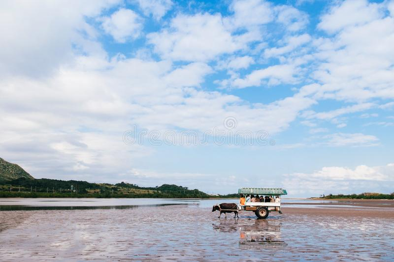 De reis van de Baffalokar op strand in Iriomote, Okinawa, Japan royalty-vrije stock afbeelding