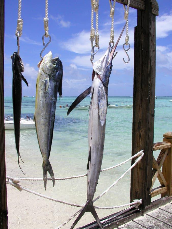 De reis van de visserij stock foto