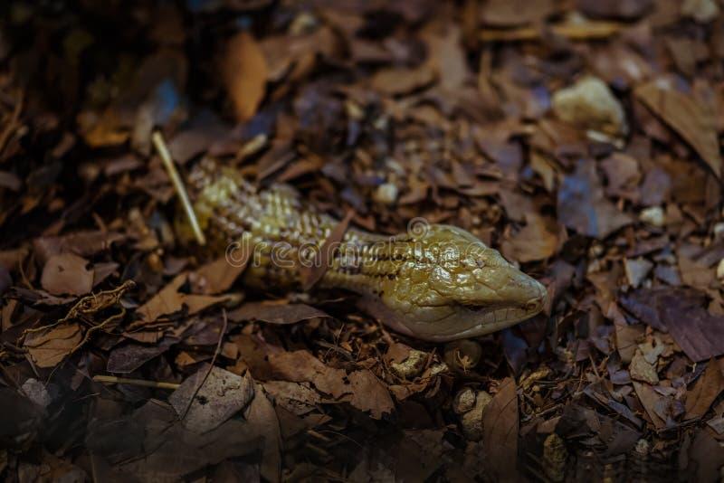 De reptielen zijn intelligent ook als dit  stock foto