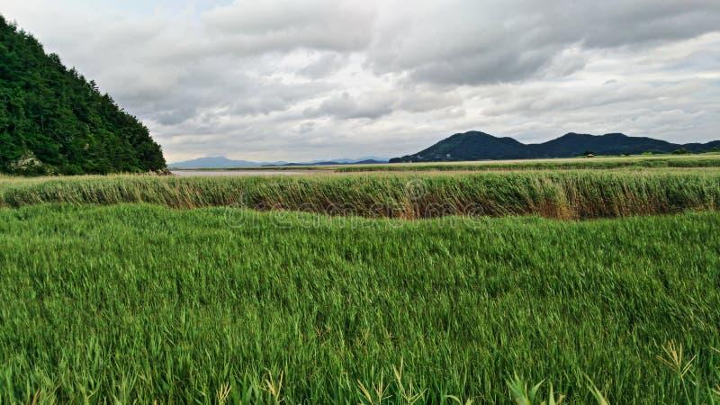 De reserve van het baaimoerasland stock fotografie