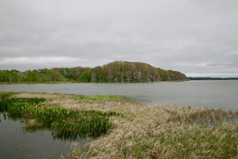 De Reserve van het moerasland royalty-vrije stock fotografie