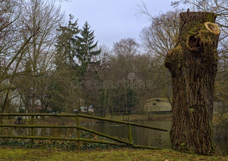 De rest van een oude boom stock foto's