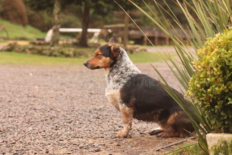 de rest van een straathond stock fotografie