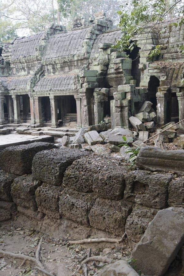 De reusachtige boomwortels overspoelen de geruïneerde tempel van Ta Prohm royalty-vrije stock afbeeldingen