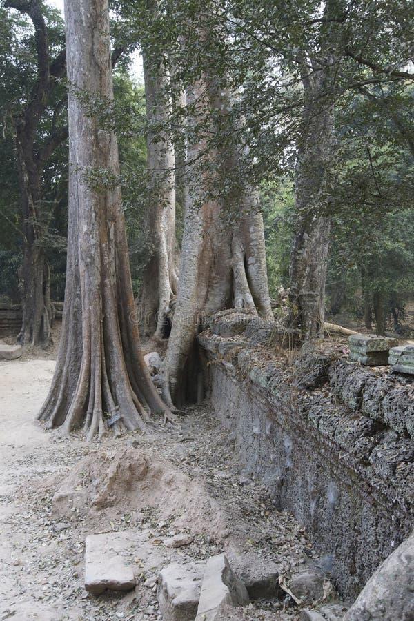 De reusachtige boomwortels overspoelen de geruïneerde tempel van Ta Prohm stock foto
