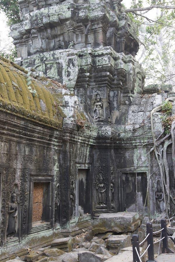 De reusachtige boomwortels overspoelen de geruïneerde tempel van Ta Prohm royalty-vrije stock foto