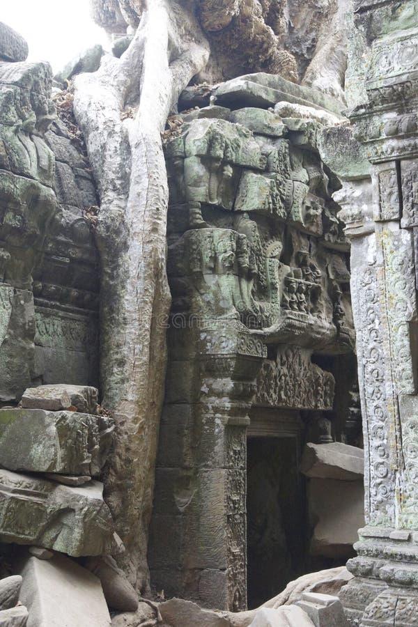 De reusachtige boomwortels overspoelen de geruïneerde tempel van Ta Prohm royalty-vrije stock foto's