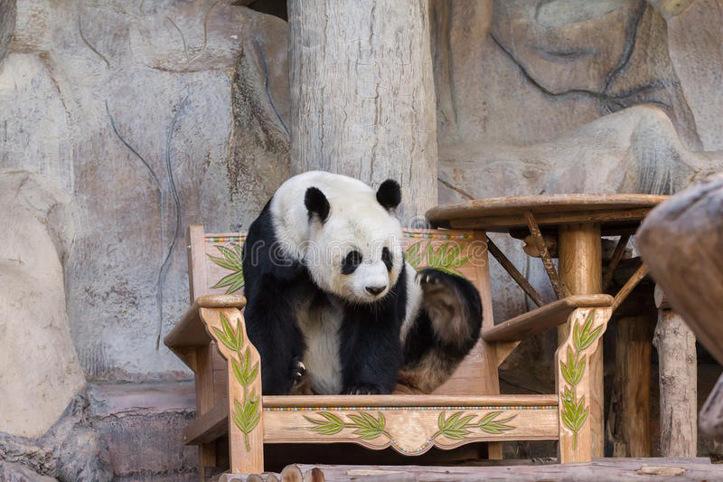 De reuze panda draagt royalty-vrije stock foto's