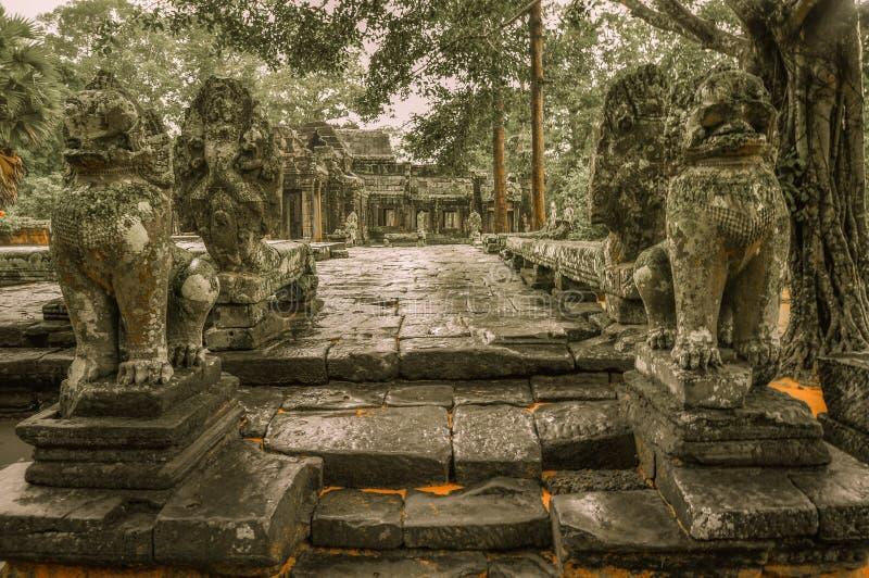 De reuzeboom die Ta Prom en de tempel van Angkor Wat, Siem behandelen oogst, Ca stock afbeeldingen