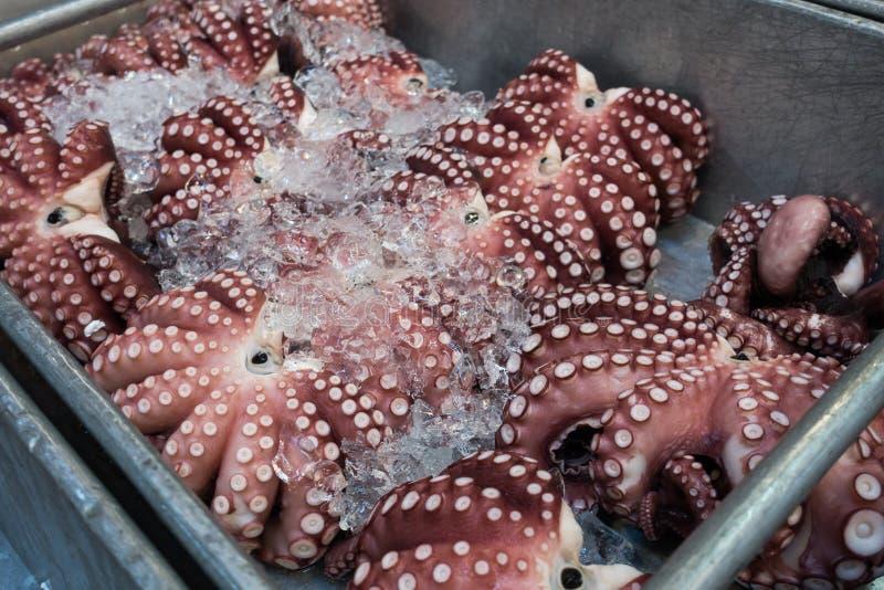 De reuzedieoctopus in mand wordt bevroren voor verkoopt stock foto