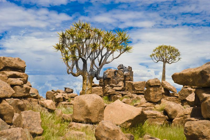De Reuzenspeelplaats en Quiver van de steenwoestijn Bomen, Namibië royalty-vrije stock foto