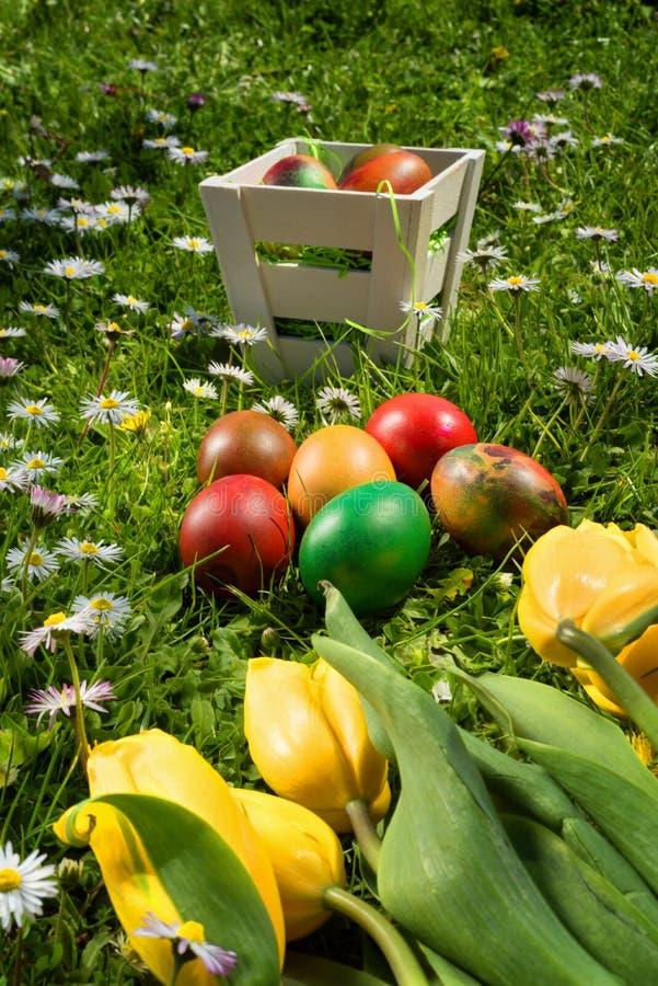 De rieten mand van Pasen met eieren en tulpen op vers gras en madeliefjes in een zonnige de lentedag stock afbeeldingen
