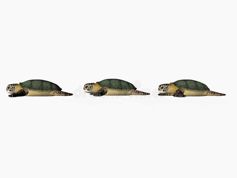 De rij van de schildpad - exemplaarruimte stock foto's