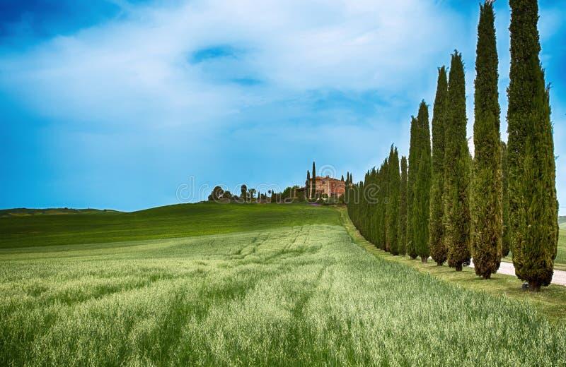 De rijen van cipresbomen en een witte weg, landelijk landschap in het land van vald Orcia dichtbij Siena, Toscanië, Italië royalty-vrije stock fotografie