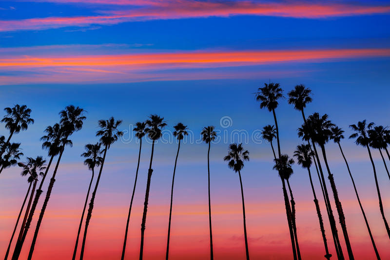 De rijen van de de zonsondergangpalm van Californië in Santa Barbara royalty-vrije stock afbeeldingen
