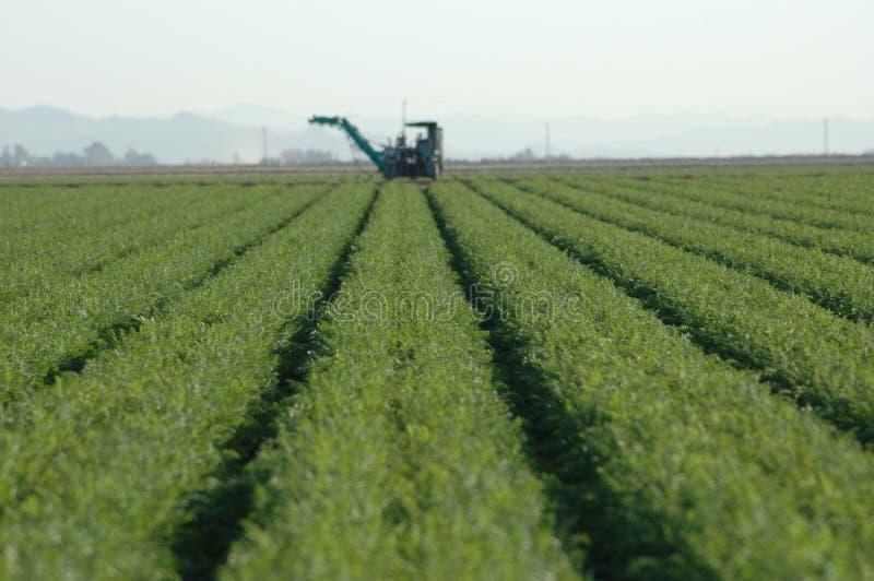 De Rijen van het gewas en Landbouwwerktuig stock foto's